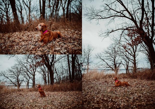 Chelsea Kyaw Photo - Des Moines Iowa Pet Photographer-2